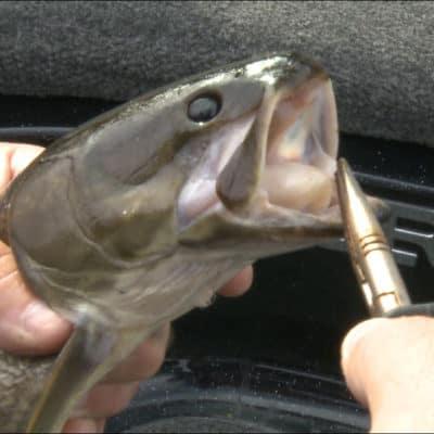 Dogfish Challenge #1