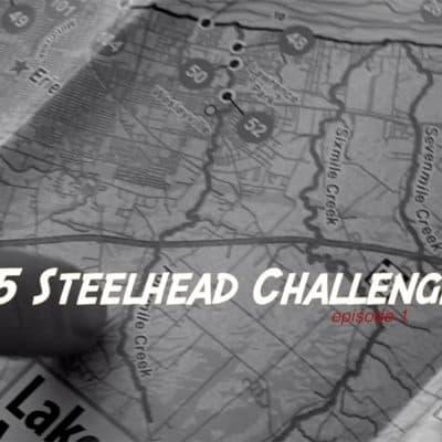 Steelhead Challenge #19
