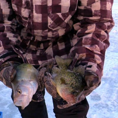 Misery Loves Crappies #8